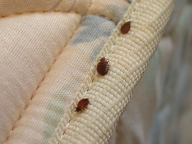 bed-bug-in-matrix