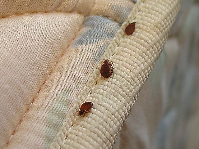 bed-bug-in-matrix