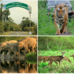 mudumalai-wildlife